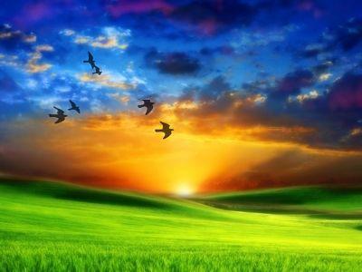 amanecer_pájaros_volando