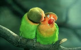 pareja_verde