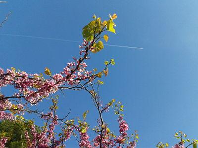 primavera_avion