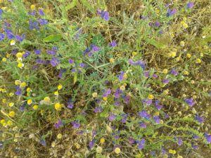 margaritas_y_flores_violetas