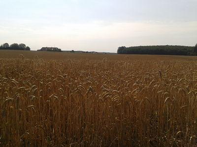 campo_cereal_agosto13
