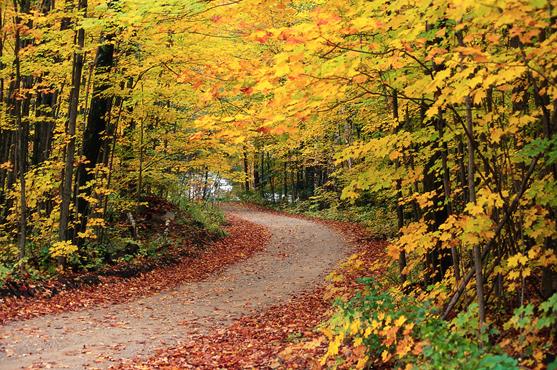 camino_bosque_otoño