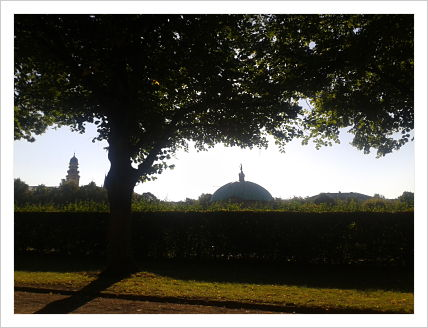 sombra_árbol