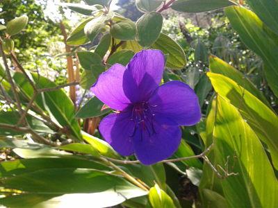 violeta_agosto14
