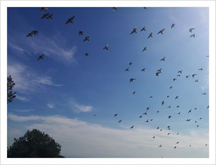 vuelo_aves_mar15